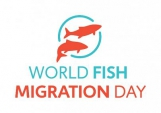 Join the 2nd World Fish Migration Day !