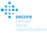 Secore Workshops 2013: pre-announcement